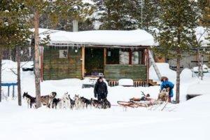Huskies in Swedish Lapland