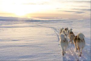 Husky Sledding in Iceland