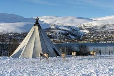 Lavu and reindeer, Tromso, Norway