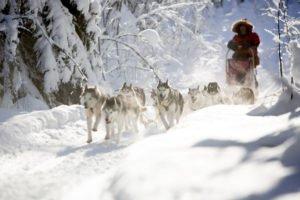 Dogsledding near Pine Bay Lodge