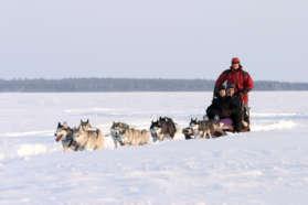 Dogsledding at Pine Bay Lodge