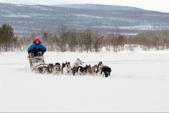 Husky sledding, Sweden