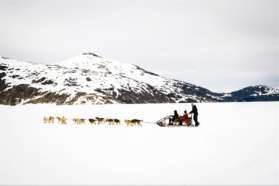 Husky sled across snowy landscape, Sweden