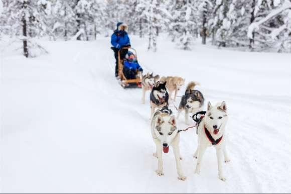 Waiting to go, Sweden huskies