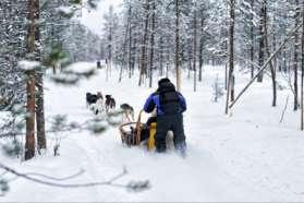 Huskies in deep snow, Sweden