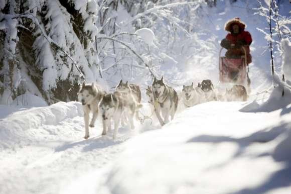 Husky sledding in beautiful sunlight - Sweden