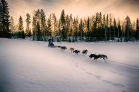Huskies, Sweden