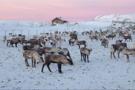 Reindeer corral, Swedish Lapland
