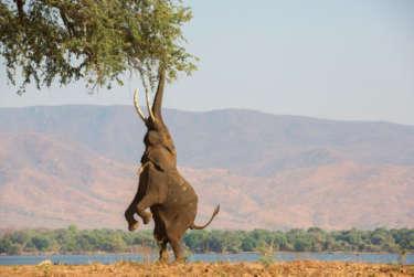 The Big 5 Safari Company