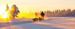 Husky adventure in Kaamos light in Swedish Lapland