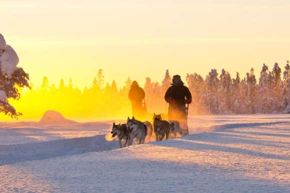 Huskies in Spring in Swedish Lapland - Copyright Michael Tšrnkvist