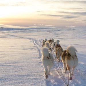 Husky sledding in Swedish Lapland