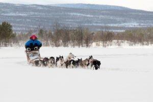 Husky adventure in Swedish Lapland