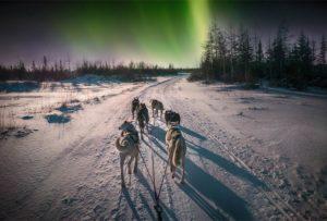 Northern lights husky tour Swedish Lapland