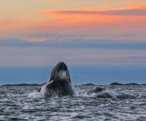 Whale Safari Tromso, Norway