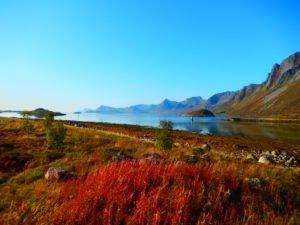 Autumn colours in Lofoten fjords