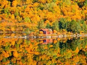 Autumn colours in Lofoten Islands