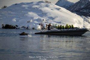 Eagle safari Lofoten Islands, Norway