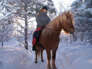 Icelandic pony ride in Sweden