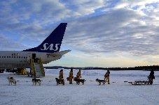 Husky Sled from Kiruna airport