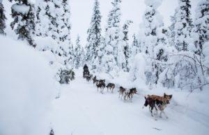 husky tour in Swedish Lapland