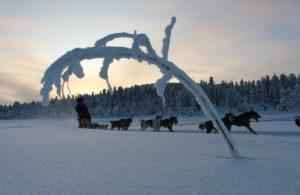 Sled dog team in Swedish Lapland