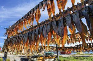 Drying Fish at Rodebay in Greenland