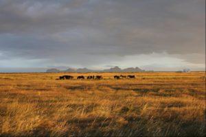 Iceland Landscape with horses