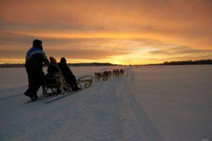 Husky sled safari under Kaamos light
