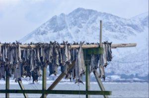 Fish drying on racks