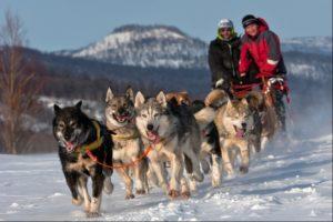 Huskies in Sweden