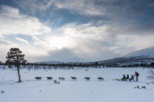 dog sled safari Abisko Sweden